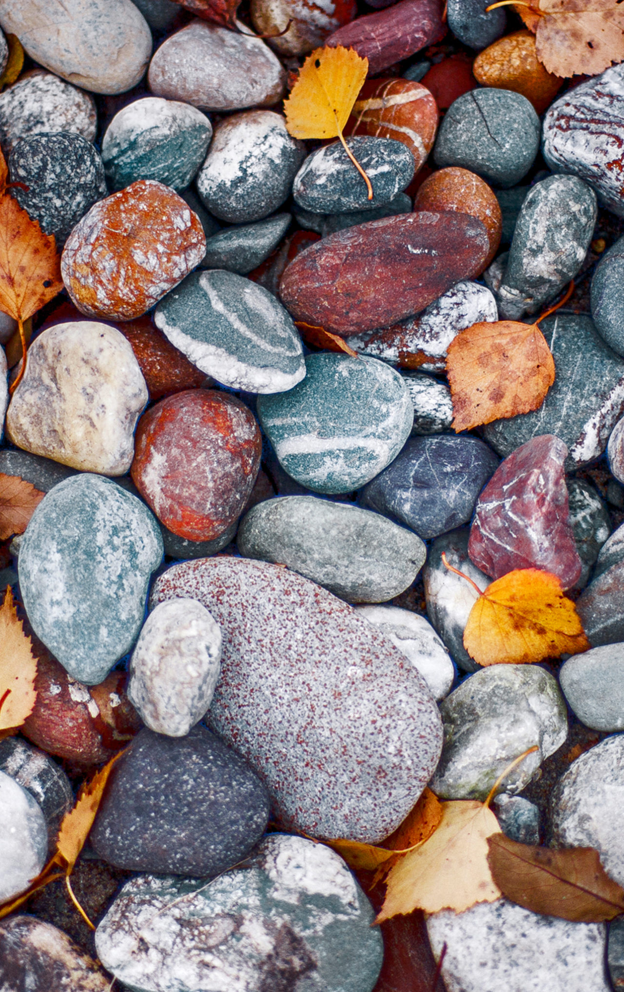 Wet river stones of different shapes and colours.